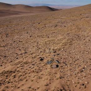 En el lugar más seco del mundo también hay vida